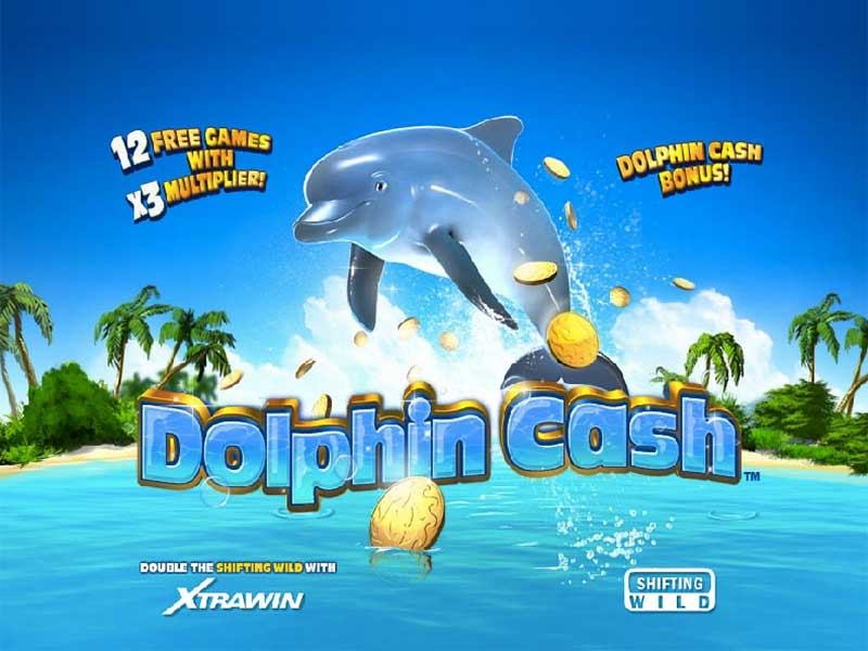 TOP bookmakers Dolphins 424153
